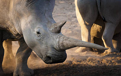 Rhinocerus Photograph - Long Horn by Andy-Kim Moeller