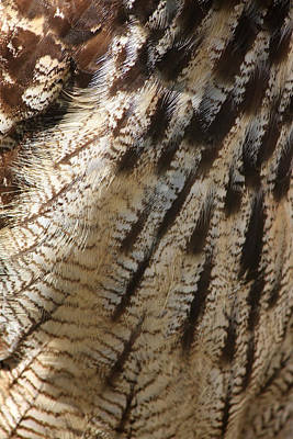 Wol Photograph - Long Horned Owl Feathers by Heidi Piccerelli