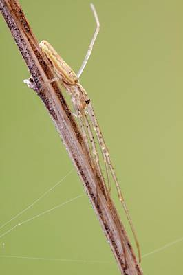 Stoke Photograph - Long Jawed Spider by Heath Mcdonald
