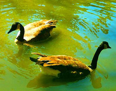 Duck Painting - Long Neck Ducks by Amy Vangsgard