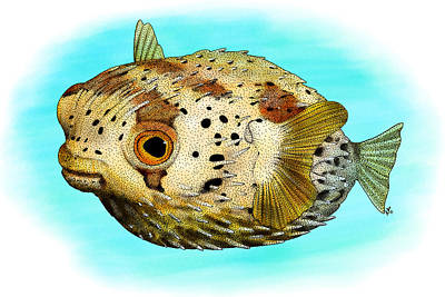Long-spine Porcupine Fish Art Print