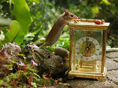 Hickory Dickory Dock Photograph - Long-tailed Field Mouse Lunchtime by Elizabeth Debenham
