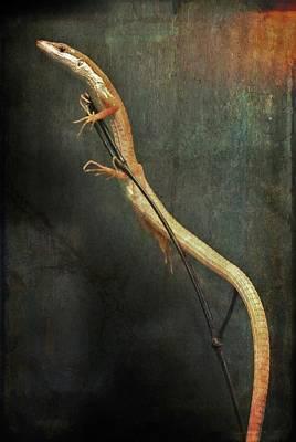 Photograph - Long-tailed Grass Lizard by Diane Alexander