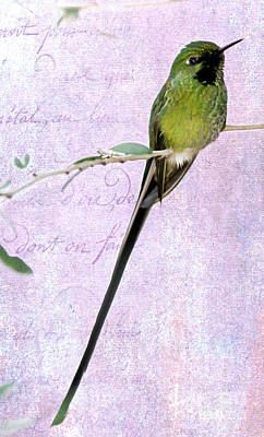 Photograph - Long Tailed Hummingbird by Sabrina L Ryan