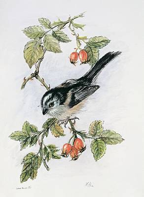 Tits Drawing - Long Tailed Tit And Rosehips by Nell Hill
