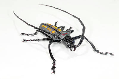 Hand Made Photograph - Longhorn Beetle by Tomasz Litwin