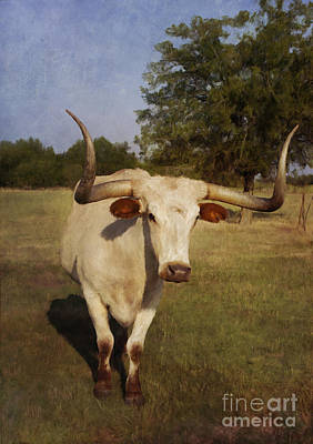 Breed Digital Art - Longhorn by Elena Nosyreva