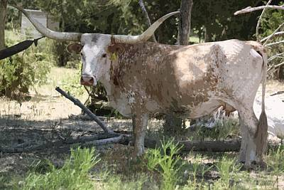 Photograph - Longhorn II by Donna G Smith