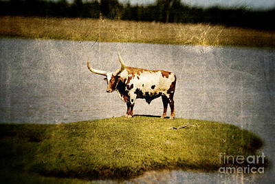 Longhorn Art Print by Scott Pellegrin