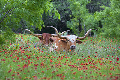 Longhorn Photograph - Longhorns In A Field Of Texas Wildflowers 1 by Rob Greebon