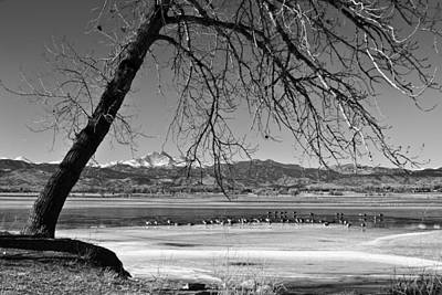 Photograph - Longs Peak Geese Bw by James BO  Insogna