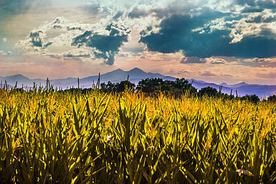 Longs Peak Harvest Art Print by Rebecca Adams