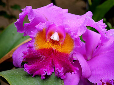 Photograph - Longwood Gardens - Orchid 2 by Richard Reeve