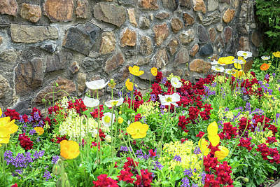Longwood Gardens Photograph - Longwood Gardens, Iceland Poppy by Lisa S. Engelbrecht