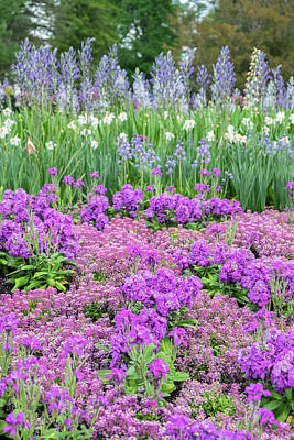 Longwood Gardens Photograph - Longwood Gardens, Spring Flowers by Lisa S. Engelbrecht