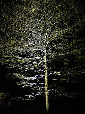 Photograph - Longwood Gardens - Winter Tree by Richard Reeve