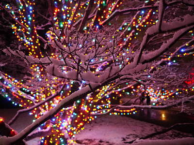 Photograph - Longwood Lights 2 by Richard Reeve