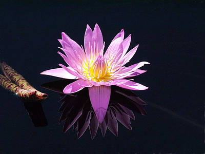 Photograph - Longwood - Water Lily Iv by Richard Reeve