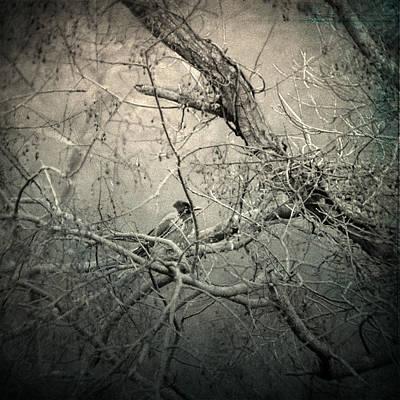 Surrealism Photograph - Lontano by Taylan Apukovska