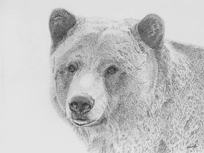 Grizzly Bears Drawing - Look At Me by Wendy Brunell