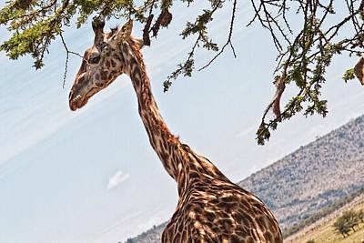 Photograph - Look At My Slender Neck by Perla Copernik
