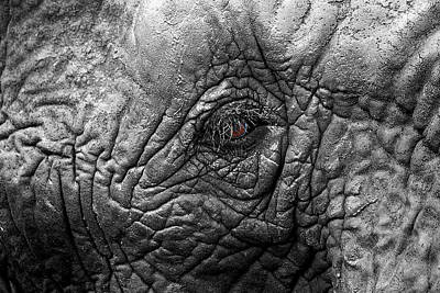 Look Into My Eye Art Print by Chris Whittle