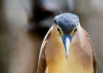 Heron Photograph - Look Into My Eyes   You Are Feeling Sleepy by Mr Bennett Kent