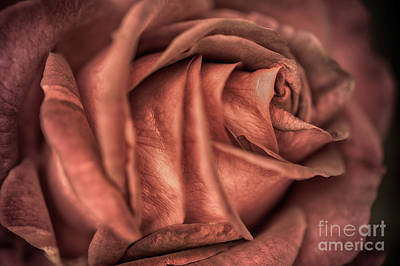 Rosaceae Photograph - Look Into My Layers by Venetta Archer
