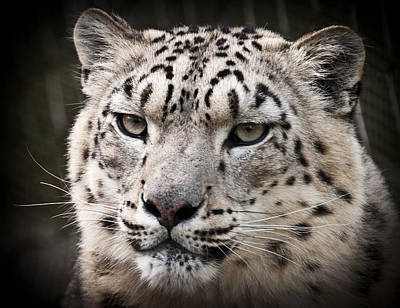 Photograph - Look Into My Leopard Eyes by Chris Boulton