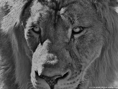Art Print featuring the photograph Look Of Concern by Elaine Malott