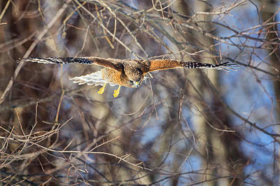 Raptor Photograph - Look Out Below by Bill Wakeley
