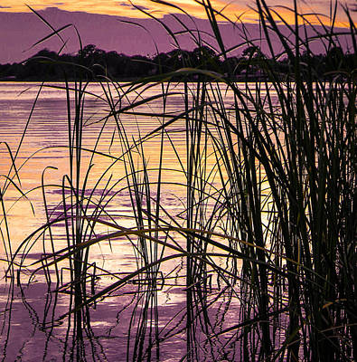 Photograph - Look Thrugh The Cattails by Christy Usilton