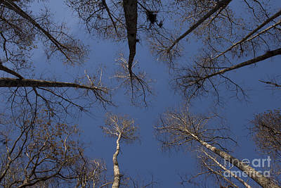 Photograph - Look Up by Meg Rousher