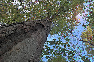 Art Print featuring the photograph Look Up by Michael Donahue