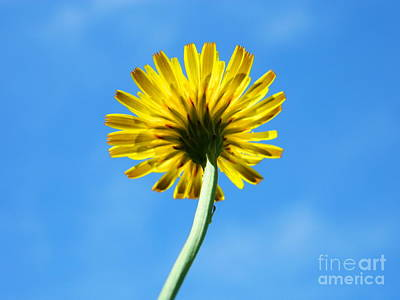 Wedding Flowers Ideas Photograph - Look Up To The Sky by Andrea Anderegg