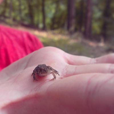 Hop Photograph - Look Who We Found! #tiny # Frog #hop by Joseph Vumbaco