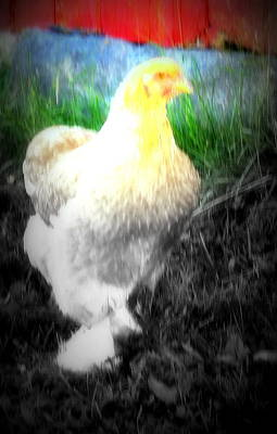 I Am Looking For My Egg Says The Hen  Art Print by Hilde Widerberg