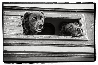 Photograph - Lookin Out For You by Craig Perry-Ollila