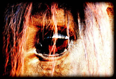 Forelock Digital Art - Lookin Right Back At You by Kathy Sampson