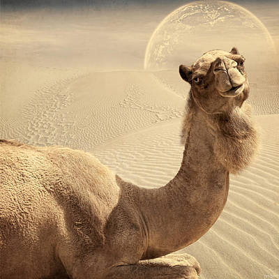 Camel Digital Art - Looking At Ya by Lourry Legarde