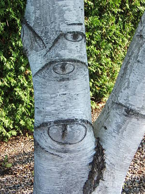 Photograph - Looking At You by Margaret McDermott