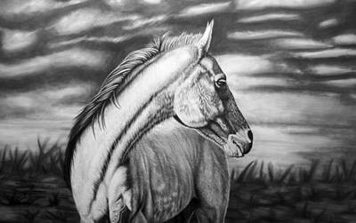Wild Horse Drawing - Looking Back by Glen Powell