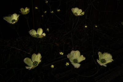 Heavenly Body Digital Art - Looking Down Into Dogwood by William Fields