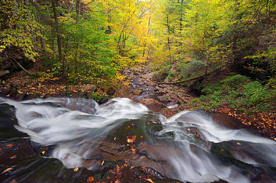 Photograph - Looking Down Into Fall by Chuck Robinson