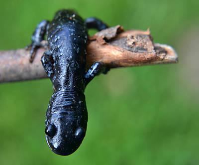 Salamanders Wall Art - Photograph - Looking Down by Jeffrey Platt