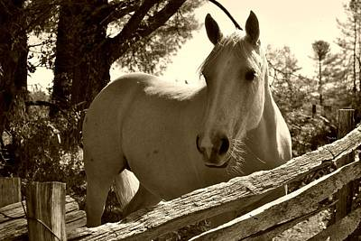 Art Print featuring the photograph Looking For A Handout by Kelly Nowak