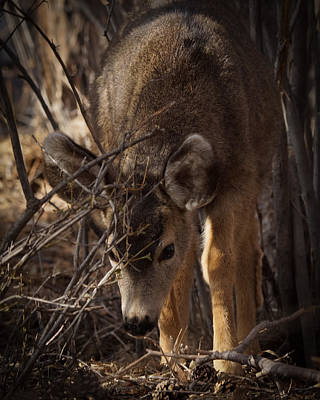 Photograph - Looking For Food by Ernie Echols