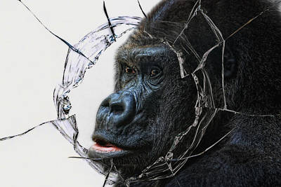 Gorilla Photograph - Looking For Freedom by Joachim G Pinkawa