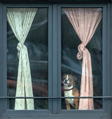 Curtains Photograph - Looking For His Buddy by Jef Van Den