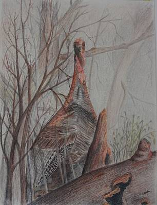 Wild Turkey Drawing - Looking For Me by Peggy Clark